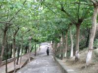 盐亭县汽车职业技术学校2020年招生计划