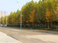 枣庄汽车科技职业学院历年招生录取分数线
